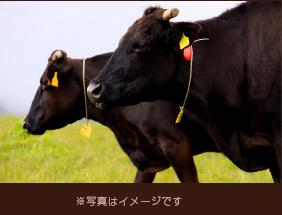 佐賀産黒毛和牛